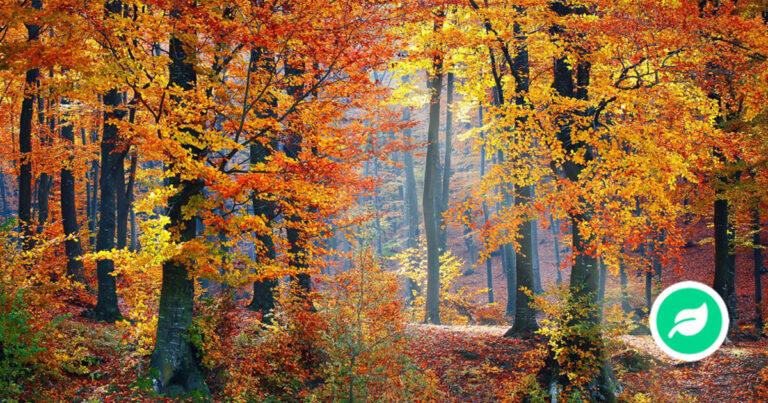 hvorfor skifter bladene farve