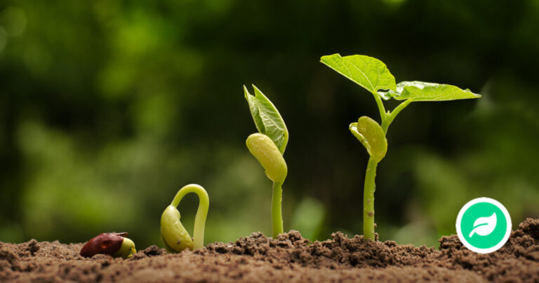 frø til en plante