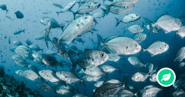 Hvordan trækker fisk vejret?